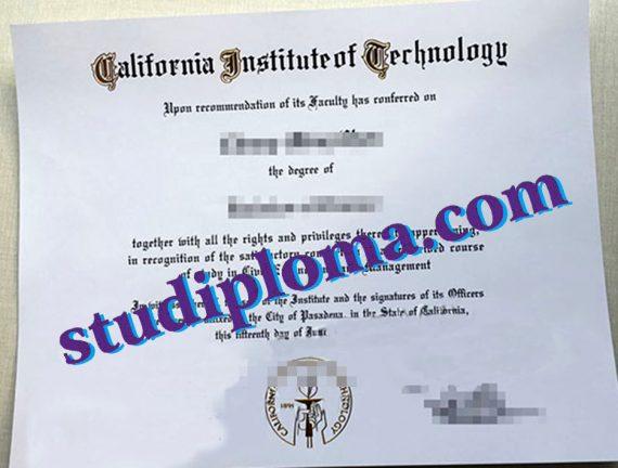 fake CIT diploma