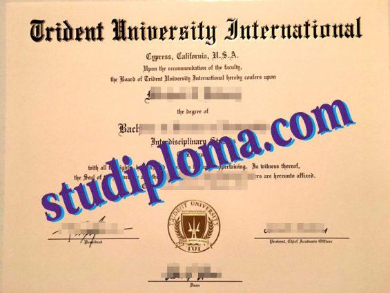 fake TUI diploma