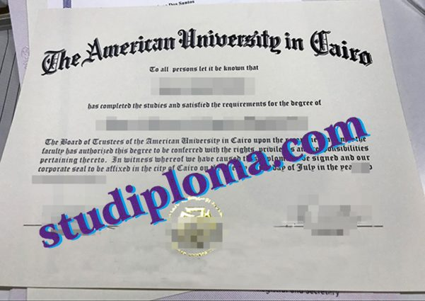 American University in Cairo degree certificate